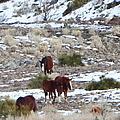 Wild Nevada Mustangs 2 by Bobbee Rickard