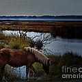 Wild One by Robert McCubbin