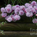 Wild Onion Flowers by Luv Photography