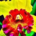 Wild Orchid by Jody Lane