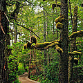 Wild Pacific Trail by Ron Ritchey