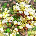 Wild Plum Flower by John K Giarratano
