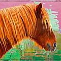 Wild Pony Abstract by Alice Gipson