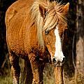 Wild Pony by Kathi Isserman