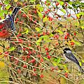 Wild Red Berrie Bush With Birds - Digital Paint by Debbie Portwood