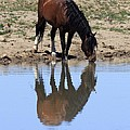 Wild Reflection by Gene Praag