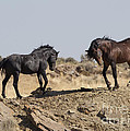 Wild Rocky Challenge by Carol Walker