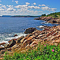 Wild Roses At Lakies Head In Cape Breton Highlands Np-ns by Ruth Hager