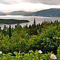 Wild Roses At Photographer's Point Overlooking Bonne Bay In Gros Morne Np-nl by Ruth Hager