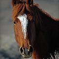 Wild Stallion by Eastern Sierra Gallery