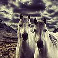 Wild Stallions by Sam Smith Photography