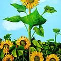 Wild Sunflowers by Dominica Alcantara