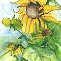Wild Sunflowers by Sherry Harradence