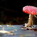 Wild Toadstool by Simon Bratt Photography LRPS