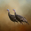 Wild Turkey At Shiloh by Jai Johnson