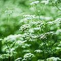 Wild Vegetation by Alexander Senin