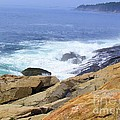 Wild Waves by Elizabeth Dow