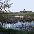 Wild Wetland by Daniel Hagerman