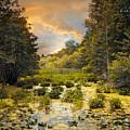 Wild Wetlands by Jessica Jenney
