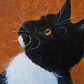 Wild Whiskers by Elizabeth Elgin