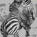 Wild Zebras by Daniel Hagerman