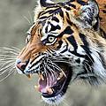 Wildcat II by Athena Mckinzie