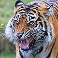 Wildcat IIi by Athena Mckinzie