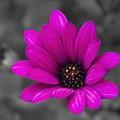 Wildflower 1 by Jacquelinemari