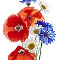 Wildflower Arrangement by Elena Elisseeva