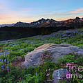 Wildflower Dawning by Mike Dawson