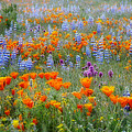 Wildflower Dreamin by Lynn Bauer
