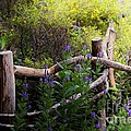 Wildflower Fence  by Elaine Manley