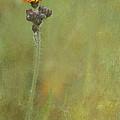 Wildflower by Fran Gallogly