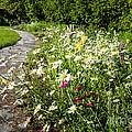 Wildflower Garden And Path To Gazebo by Elena Elisseeva