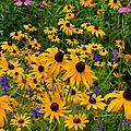 Wildflower Gold by Regina Geoghan