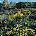 Wildflower Hillside by Leland D Howard