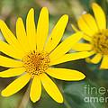 Wildflower by Lori Tordsen