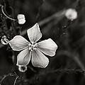 Wildflower by Marilyn Hunt