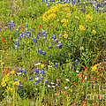 Wildflower Patch by Bob Phillips