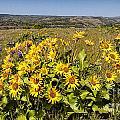 Wildflower Plateau by Stuart Gordon