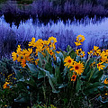 Wildflower Reflection by Dan Sproul