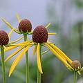 Wildflower Spinners by Rosanne Jordan