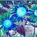 Wildflower by Tom Druin