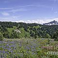 Wildflower Vista by Sharon Seaward