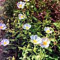Wildflower Wandering by Georgianne Giese