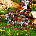 Wildflower Waterfall by Tranquil Light  Photography