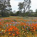 Wildflower Wonderland 2 by Lynn Bauer