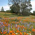 Wildflower Wonderland 3 by Lynn Bauer
