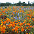 Wildflower Wonderland by Lynn Bauer