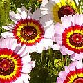 Wildflowerd Wide 1 by Amy Vangsgard